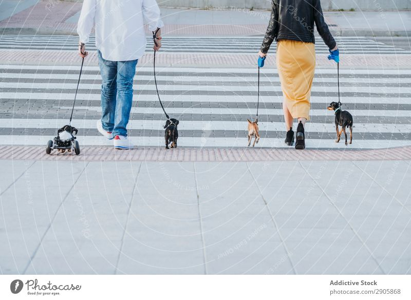 Couple walking with dogs and pet with wheelchair on street Dog Wheelchair Pet paralyzed Handicapped Dachshund Walking Street disabled physical Relaxation