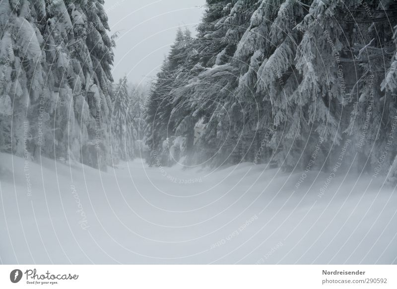 Nature White Plant Loneliness Winter Landscape Forest Dark Cold Snow Life Lanes & trails Moody Ice Wind Climate