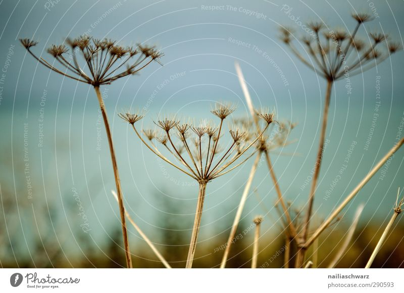 Nature Blue Green Plant Colour Environment Meadow Autumn Grass Freedom Blossom Brown Natural Field Dry Decline