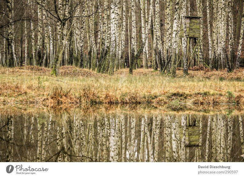 Nature Green Water White Summer Plant Animal Landscape Black Forest Yellow Environment Autumn Grass Spring Brown