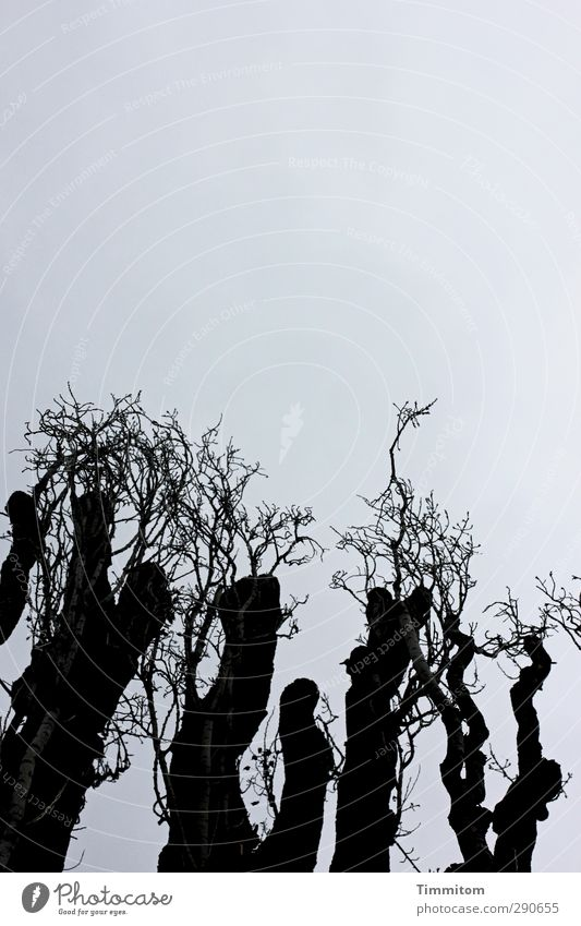 Sky Nature Plant Tree Black Dark Emotions Wood Gray Growth Esthetic Branch Simple Thin