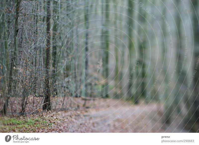Forest walk 2 Environment Nature Landscape Plant Tree Bushes Gray Green Lanes & trails Tilt-Shift Colour photo Exterior shot Day Blur