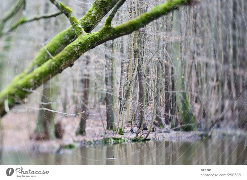 250 Environment Nature Landscape Plant Water Tree Forest Gray Green Tilt-Shift Marsh Reflection Colour photo Exterior shot Deserted Day Blur