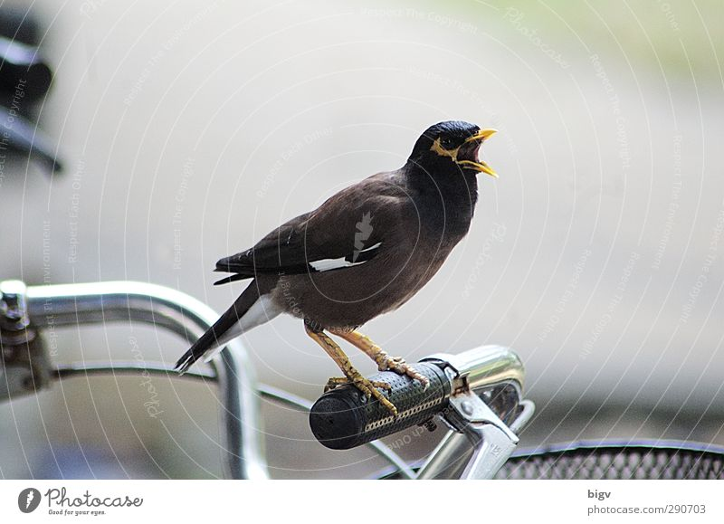 Animal Bird Exceptional Bicycle Power Photography Aggression