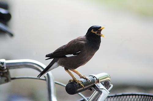 bird Bicycle Animal Bird 1 Aggression Exceptional Power Photography vindicate Colour photo Exterior shot Close-up Deserted Isolated Image Day Silhouette