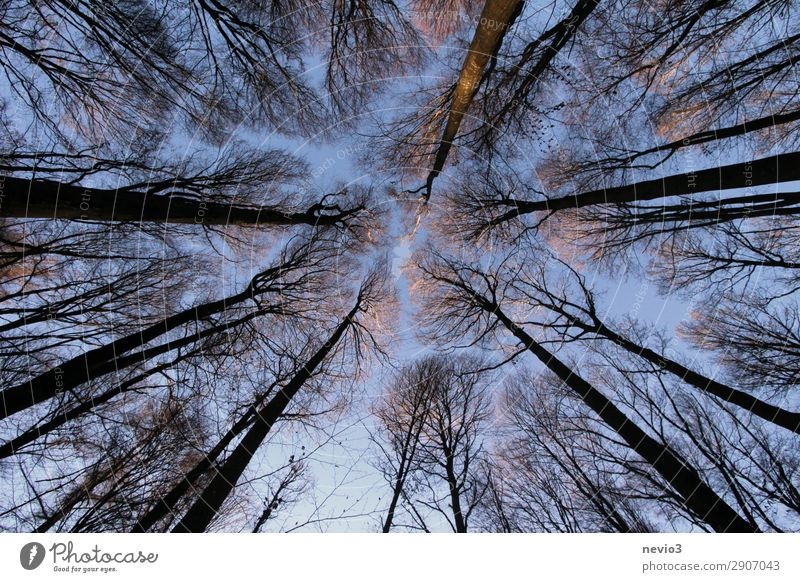 Bare trees Nature Autumn Winter Tree Old Dark Gigantic Large Tall Sustainability Point Forest Clearing Edge of the forest Height Upward forest work Forestry