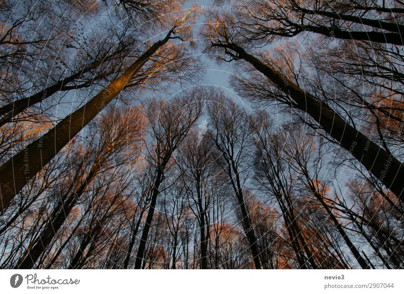 Bare trees Nature Landscape Tree Agricultural crop Old Dark Wild Forest Clearing Edge of the forest Forestry Forstwald Silhouette Sunlight Evening sun Warmth