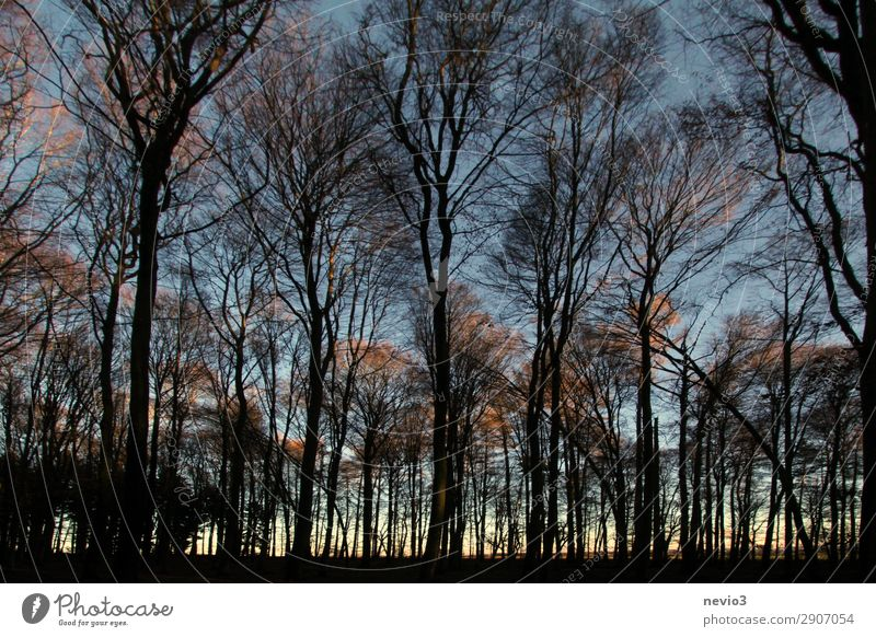 Bare trees Nature Tree Forest Old Dark Clearing Edge of the forest Forestry Forstwald Silhouette Black Sunset Evening Dusk Warmth Warm light Moody Tree trunk