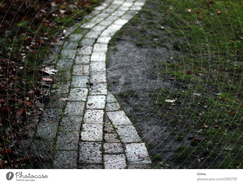 HOME WAY Winter Leaf Foliage plant Garden Park Meadow Pedestrian Lanes & trails Pave Paving stone Garden path Wet Trust Secrecy Wisdom Fatigue Esthetic Movement