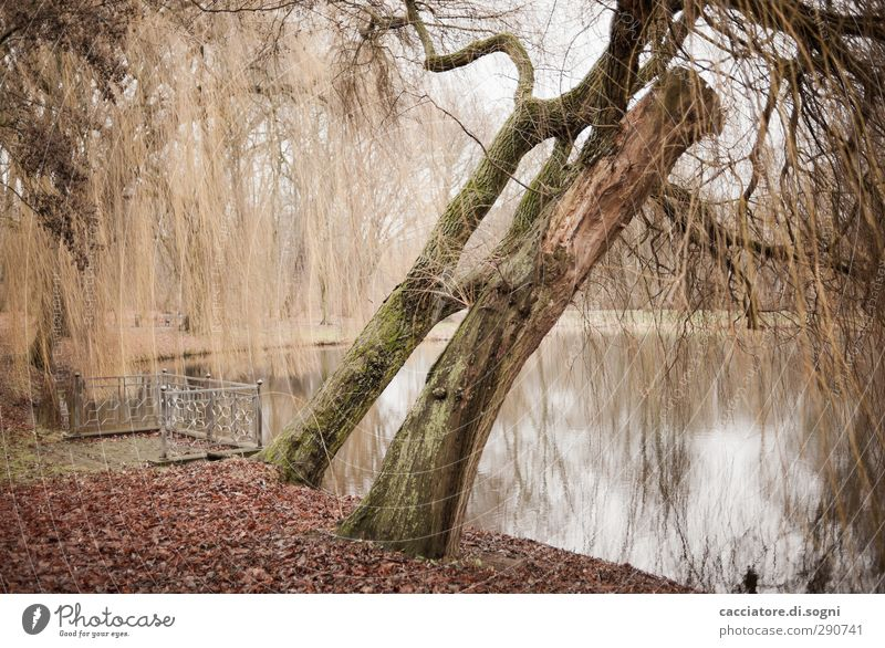 Tree Loneliness Calm Landscape Autumn Sadness Brown Natural Park Orange Idyll Gloomy Transience Eternity Lakeside Handrail