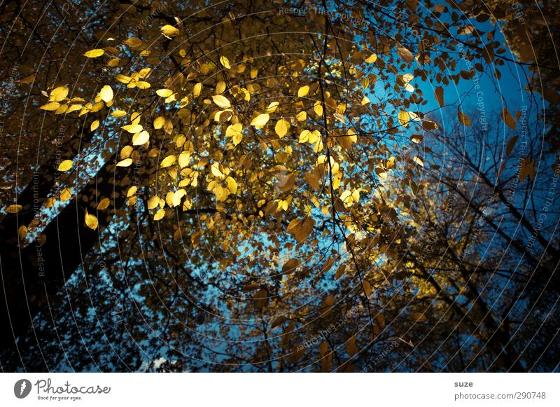 tinsel glitter Night life Feasts & Celebrations Autumn Leaf Forest Glittering Illuminate Exceptional Dark Beautiful Blue Yellow Autumn leaves Early fall