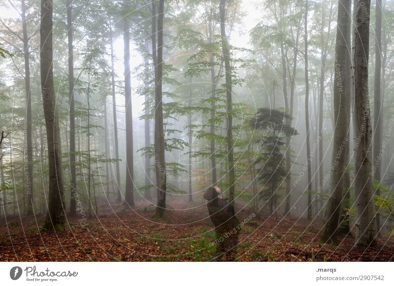 Human being Nature Man Landscape Tree Relaxation Forest Adults Autumn Environment Above Trip Fog Stand To enjoy Elements