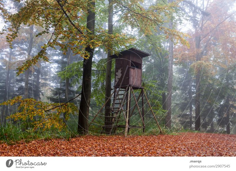 raised hide Forester Agriculture Forestry Environment Nature Autumn Fog Tree Hunting Blind Moody Idyll Sustainability Colour photo Exterior shot Deserted