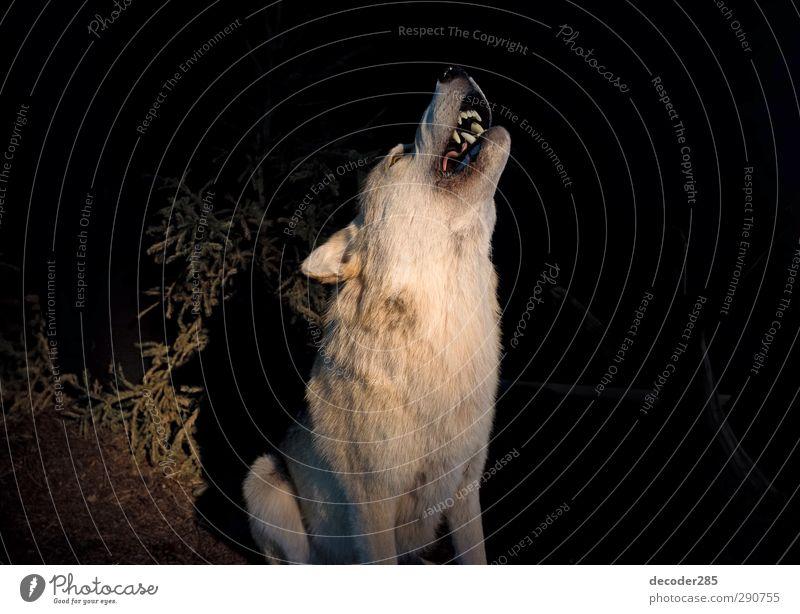 Green Animal Environment Gray Power Wild Wild animal Leisure and hobbies Large Hiking Threat Pelt Kitsch Anger Creepy Hunting