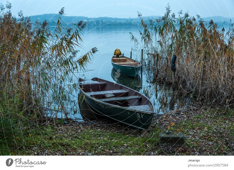residents free Nature Landscape Common Reed Lake Lake Constance Rowboat Beautiful Idyll Drop anchor Colour photo Exterior shot Deserted Evening Twilight