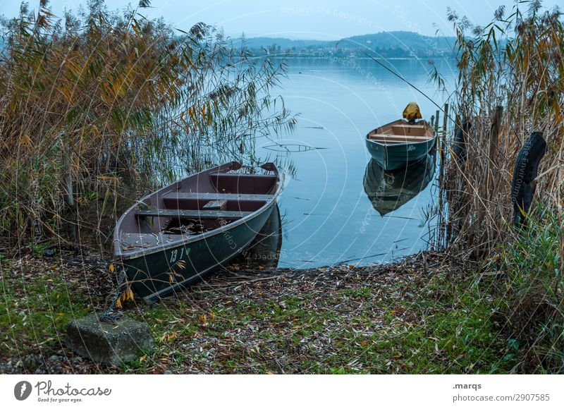investor Nature Landscape Common Reed Lake Lake Constance Rowboat Drop anchor Beautiful Calm Logistics Idyll Colour photo Exterior shot Deserted Copy Space top