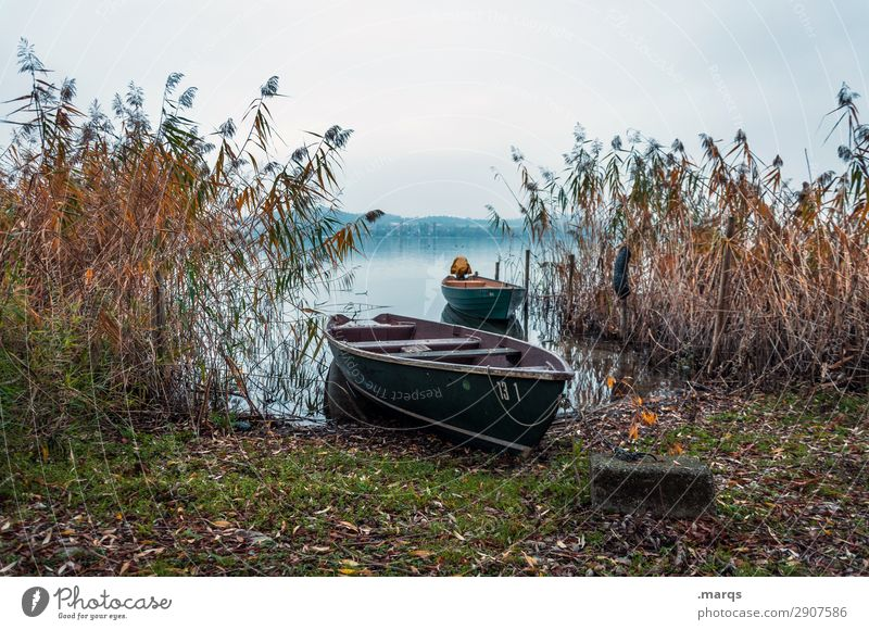bank Environment Nature Landscape Elements Sky Autumn Plant Common Reed Lakeside Lake Constance Rowboat Relaxation Moody Idyll Calm Drop anchor 2 Colour photo