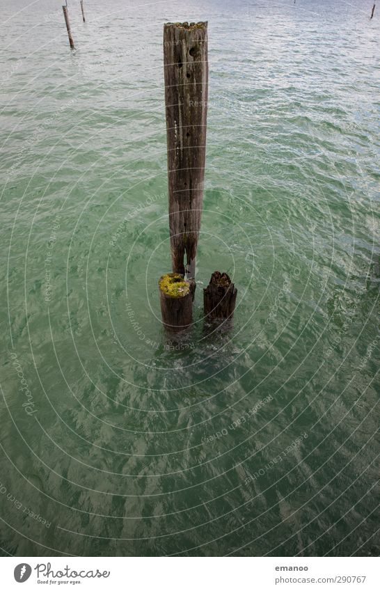 Wood in water Environment Nature Landscape Water Climate Weather Tree Moss Waves Coast Lake Navigation Harbour Old Broken Green Pole Bollard Lake Constance