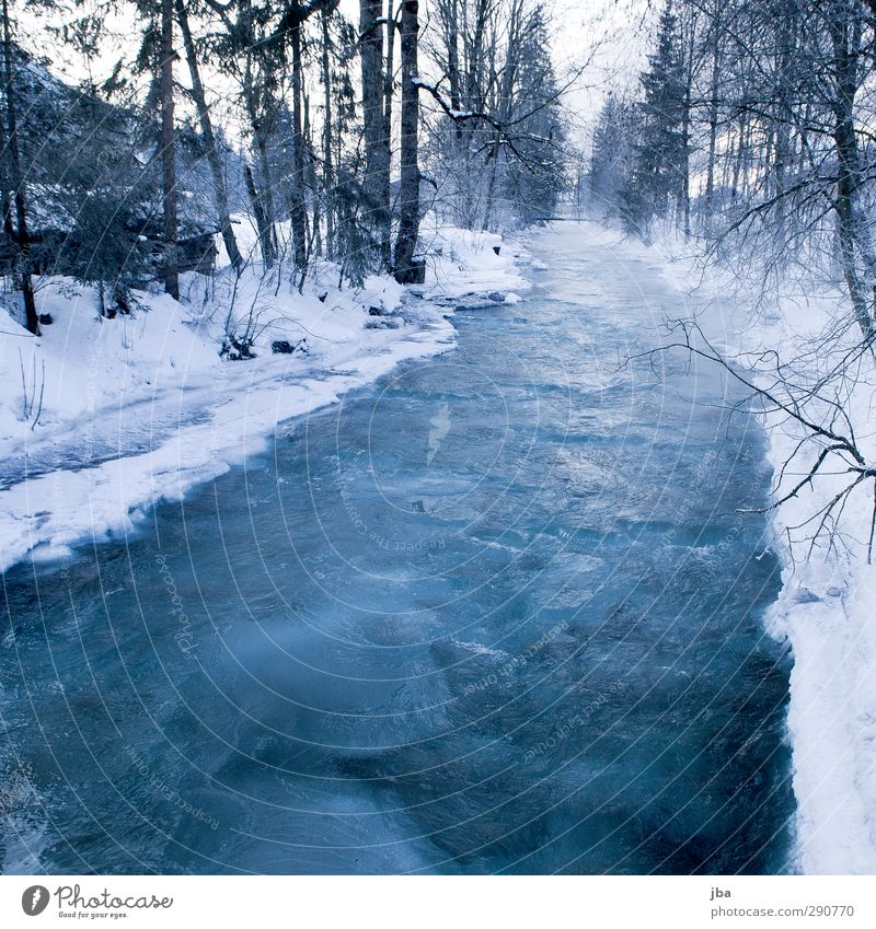 Frozen II Relaxation Calm Winter Snow Environment Nature Elements Ice Frost Tree Fir tree Branch Forest Brook Saanenland Thin Sharp-edged Firm Cold Wet Blue
