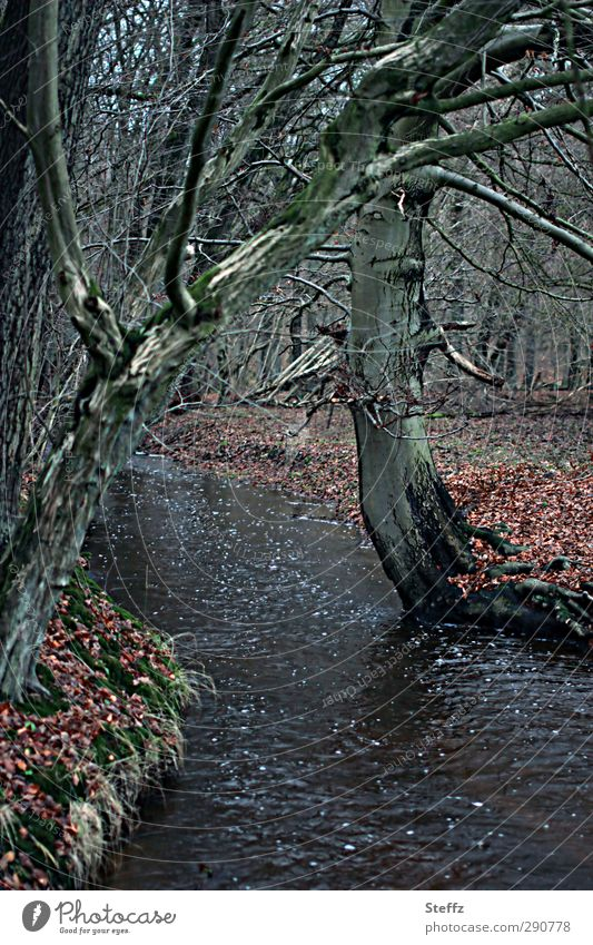The forest brook rushes. Environment Nature Landscape Water Autumn Tree Branch Twigs and branches Leaf Autumn leaves Forest Brook Banks of a brook Dark
