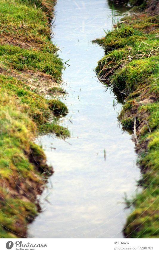 mini - fjord Environment Nature Landscape Water Grass Moss Meadow Field Bog Marsh Brook Wet Dirty Offroad Tractor track Puddle River bank Earth