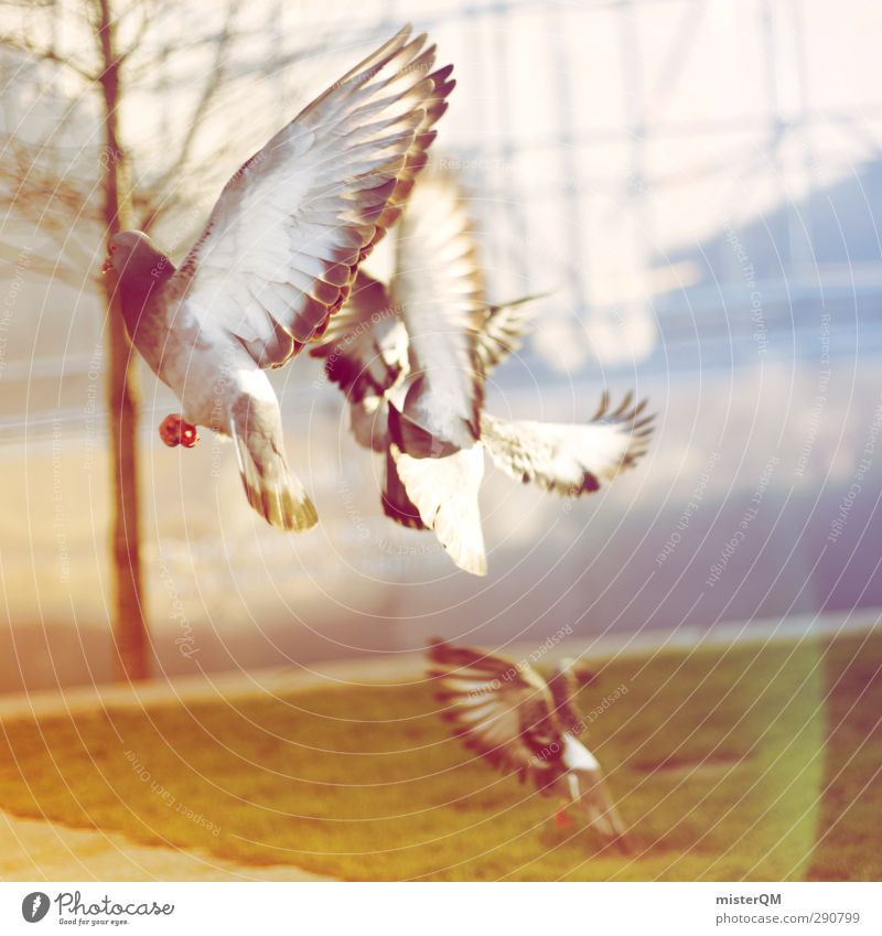 Away We Fly. Art Esthetic Flying Floating Bird Pigeon Feed the birds Feather Wing Air Town Scare Escape Animal Colour photo Subdued colour Exterior shot