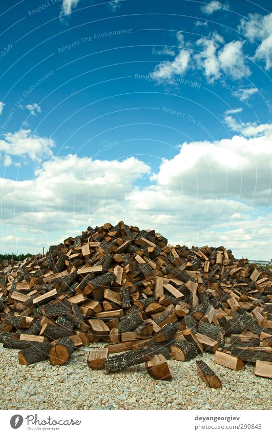 Stack of freshly cut trees on blue sku background Sky Nature Blue Tree Forest Wood Natural Brown Paper Industry End Material Accumulation Forestry Stack Pine