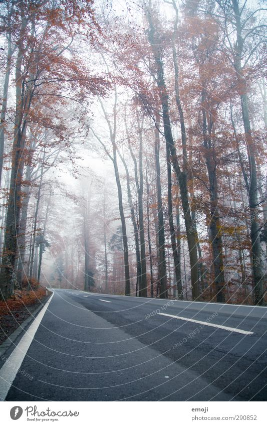 Nature Tree Landscape Forest Environment Dark Cold Street Autumn Fog Bad weather