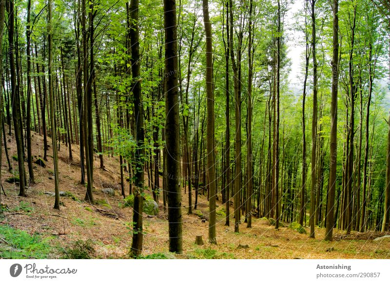 Sky Nature Green Summer Plant Tree Leaf Landscape Black Forest Environment Warmth Grass Rock Brown Weather