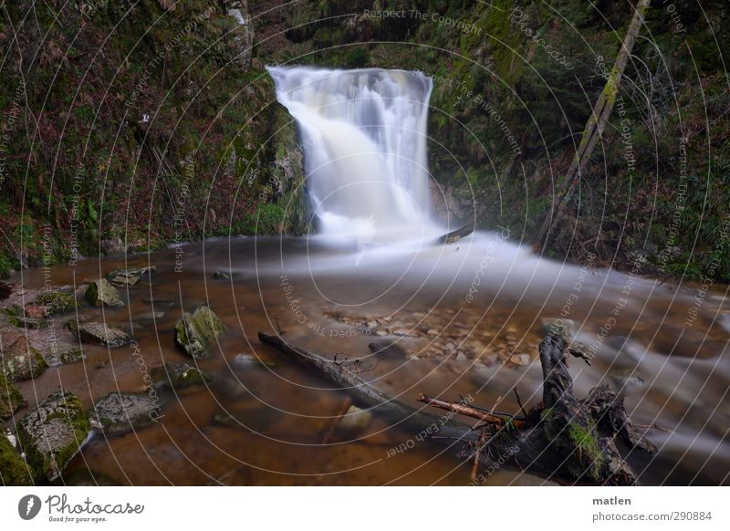 Green Water White Plant Tree Winter Landscape Mountain Grass Rock Brown River bank Moss Waterfall Canyon Climate change