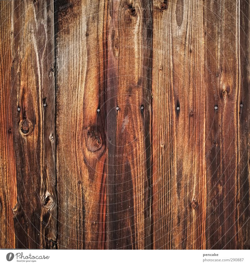 full of the board Hut Wall (barrier) Wall (building) Wood Near Naked Wooden wall Texture of wood Wood grain Nail Wooden board Wooden hut Colour photo