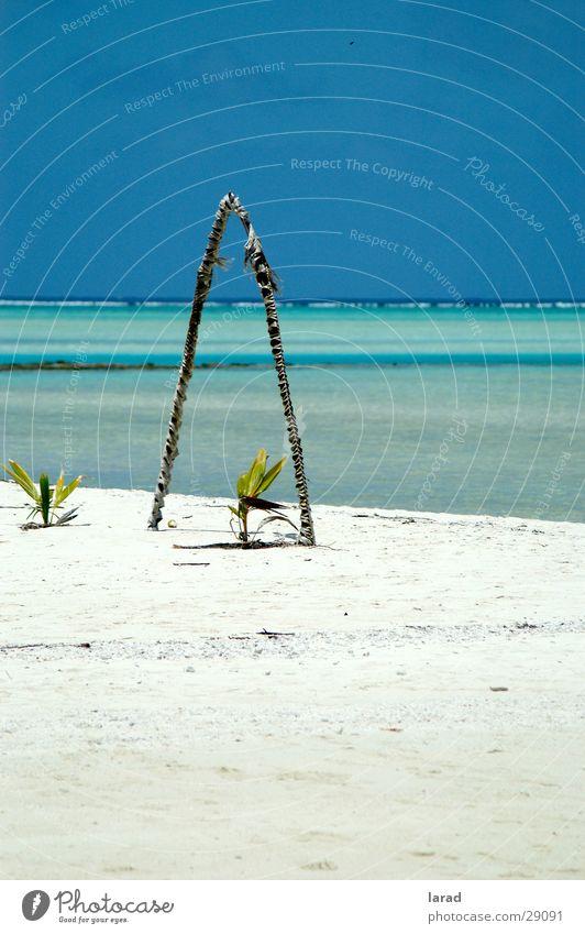 Aitutaki Dreams Caribbean Sea Lagoon Beach Ocean Idyllic beach Reef Los Angeles Cook Islands Coconut palm Sand Sky