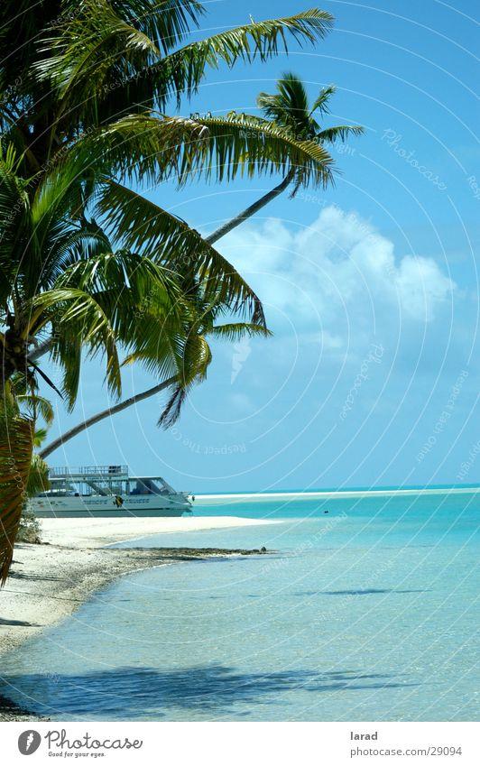 South Seas dream Palm tree Beach Ocean Lagoon Reef Caribbean Sea turquoise blue water