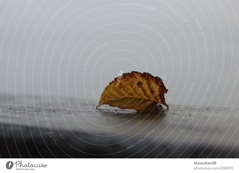 Nature Old Leaf Yellow Dark Cold Autumn Gray Brown Lie Moody Gloomy Change Transience Simple Point