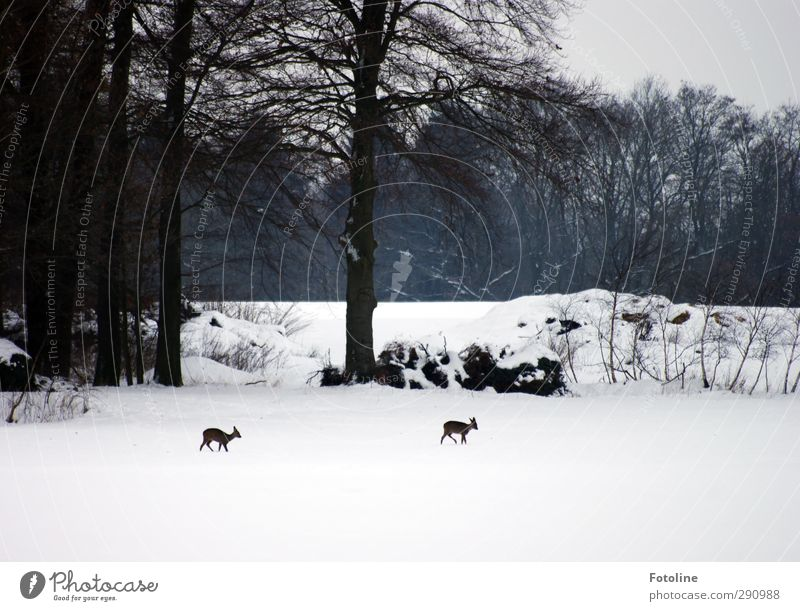 hunger Environment Nature Landscape Plant Animal Sky Winter Ice Frost Snow Tree Bushes Field Forest Bright Natural Black White Gray clouds Roe deer Appetite