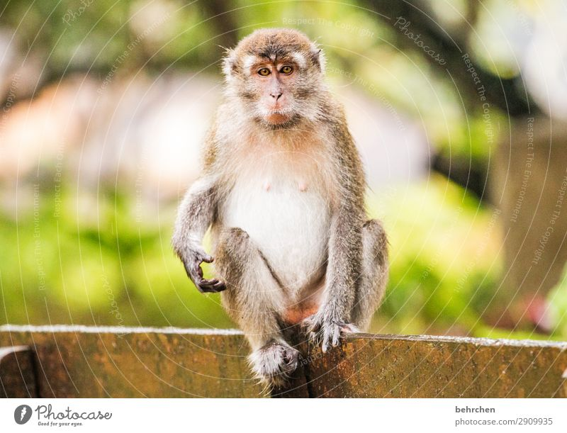 Vacation & Travel Nature Animal Far-off places Tourism Exceptional Freedom Trip Wild animal Adventure Fantastic Observe Wanderlust Pelt Exotic Virgin forest