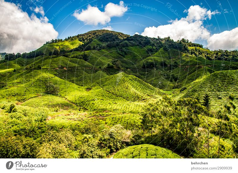 in the green mountains Vacation & Travel Tourism Trip Adventure Far-off places Freedom Nature Landscape Sky Clouds Plant Tree Bushes Leaf Agricultural crop