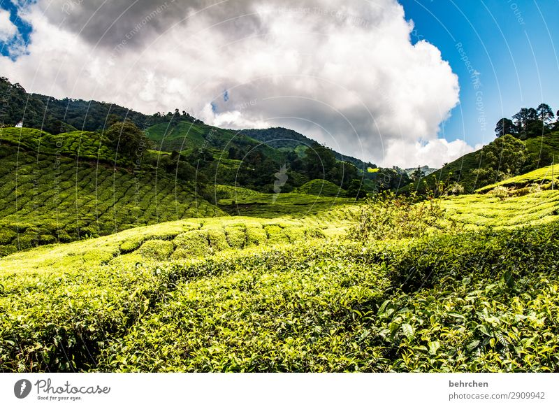 Sky Vacation & Travel Nature Plant Green Landscape Clouds Leaf Far-off places Mountain Environment Tourism Exceptional Freedom Trip Field