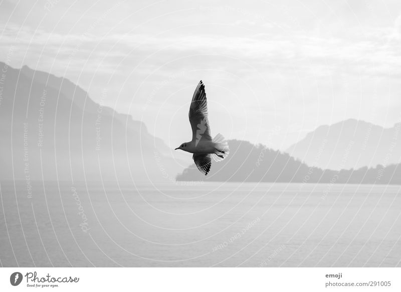 free spirit Environment Nature Sky Lake Animal Bird 1 Freedom Flying Seagull Black & white photo Exterior shot Day Contrast Silhouette Shallow depth of field