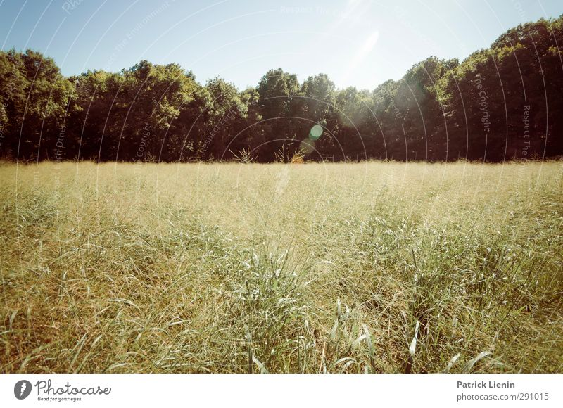 Nature Vacation & Travel Summer Plant Tree Sun Loneliness Landscape Relaxation Forest Environment Meadow Grass Weather Beautiful weather Uniqueness