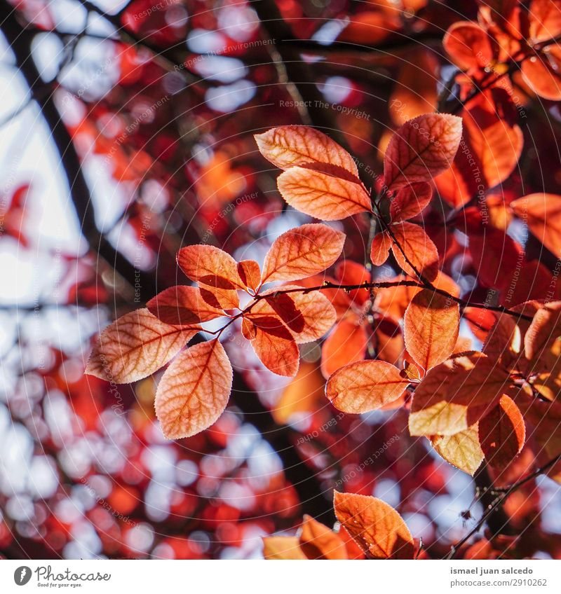 red tree leaves in springtime Nature Red Tree Leaf Winter Autumn Spring Branch Beauty Photography Consistency Fragile
