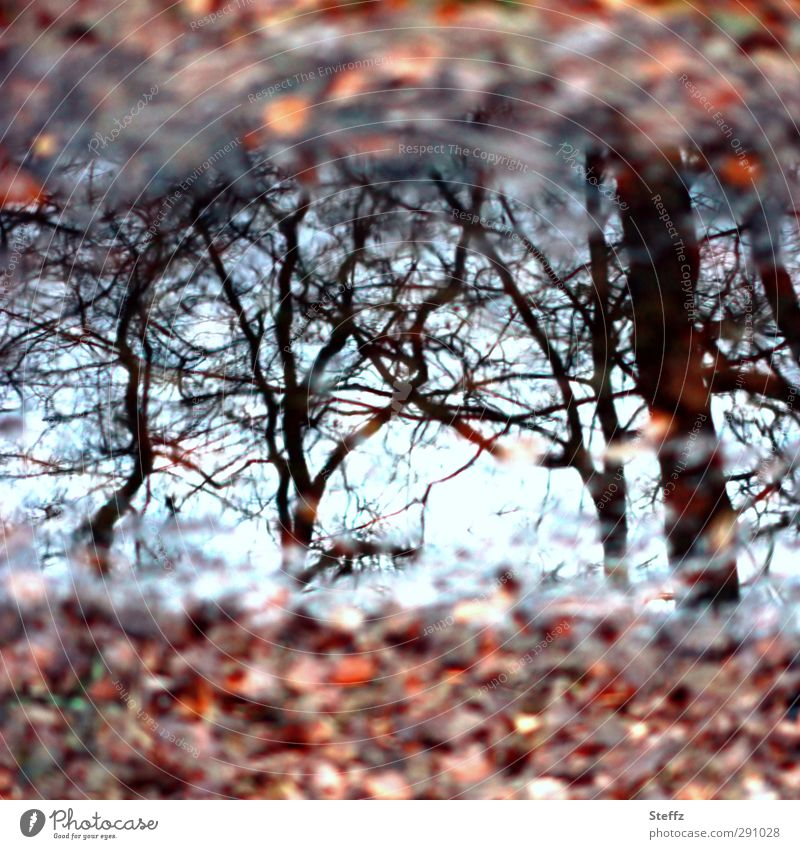November mirrored in a puddle puddle mirroring puddle picture Puddle Autumn leaves Automn wood November picture November blues Meaning November mood light blue