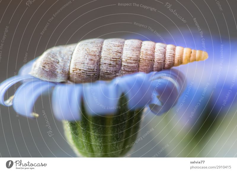 closing mouth auger Environment Nature Plant Flower Blossom Garden Animal Wild animal Snail 1 Point Blue Gray Green Structures and shapes Rotated Spiral