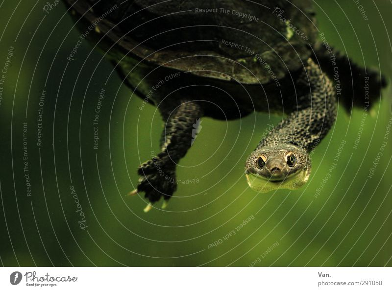 Hello! Nature Animal Water Wild animal Claw Aquarium Turtle Head Neck 1 Swimming & Bathing Green Colour photo Subdued colour Interior shot Close-up Deserted