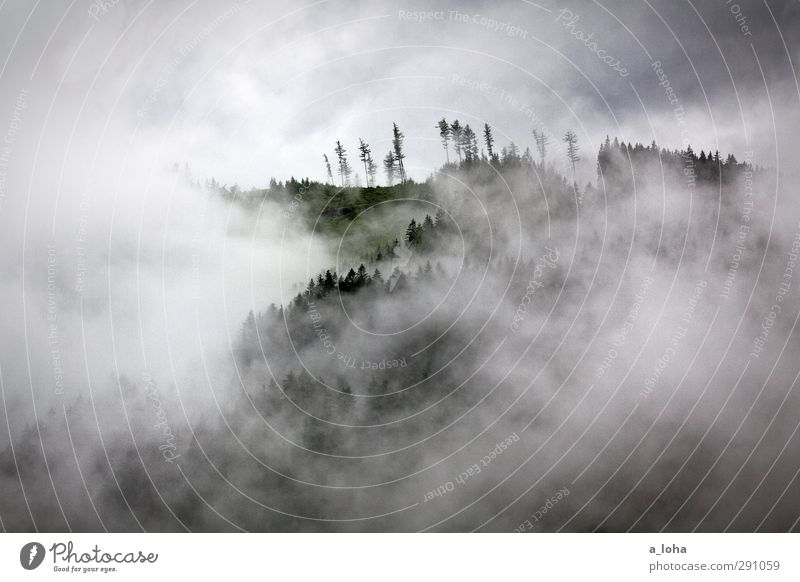 mountain forest tree fog Nature Landscape Elements Air Sky Clouds Summer Climate Bad weather Fog Rain Thunder and lightning Tree Forest Alps Mountain Peak