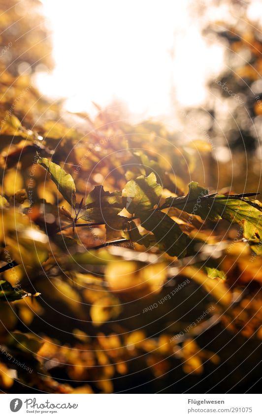 Nature Beautiful Plant Tree Animal Leaf Landscape Forest Environment Autumn Park Weather Climate Beautiful weather Virgin forest Autumn leaves