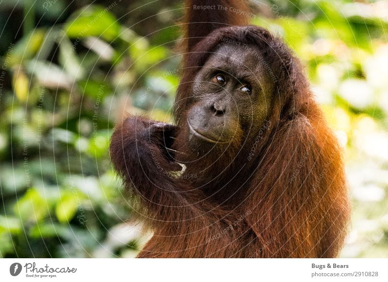 Vacation & Travel Nature Tree Animal Forest Orange Wild animal Adventure Protection Mother Asia Pelt Virgin forest Environmental protection Animal face
