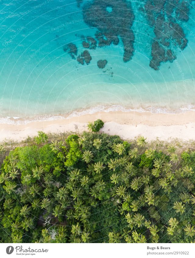 dream beach Nature Water Summer Beautiful weather Virgin forest Waves Coast Beach Reef Coral reef Ocean Island Oasis Happy Adventure Paradise Idyllic beach
