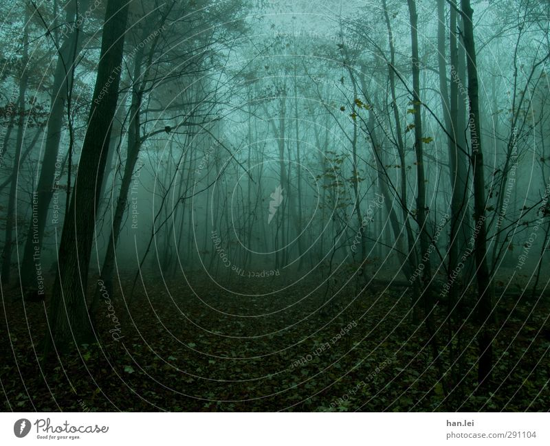 fog Nature Autumn Fog Forest Freeze Woodground Leaf Forestry Ghosts & Spectres  Twilight Spooky Eerie Dangerous Loneliness Colour photo Exterior shot Deserted