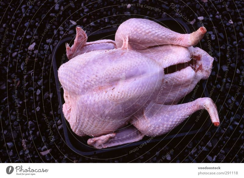 Uncooked Turkey Food Meat Feasts & Celebrations Bird Sand Fat Death roasting tim Raw uncooked plucked Lifeless Christmas & Advent Cooking Preparation
